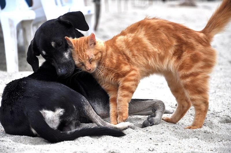 Les animaux en surpoids